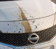 Nissan Pintura Autolimpiable
